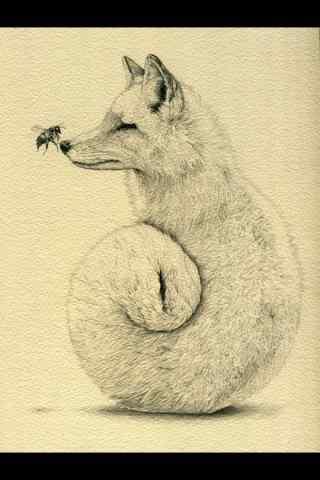 手绘狐狸手机锁屏壁纸