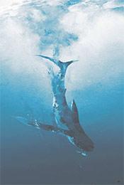 沉入海底的鲸鱼唯