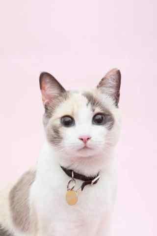 可爱粉色猫咪手机壁纸