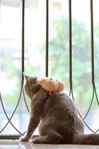 猫咪背着可爱的轻松熊背包手机壁纸