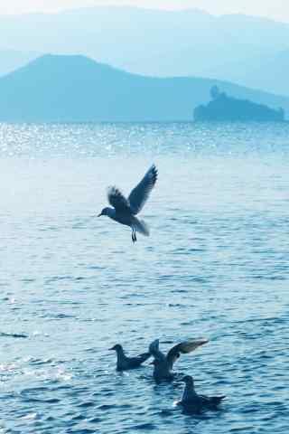 泸沽湖清新风景手机壁纸