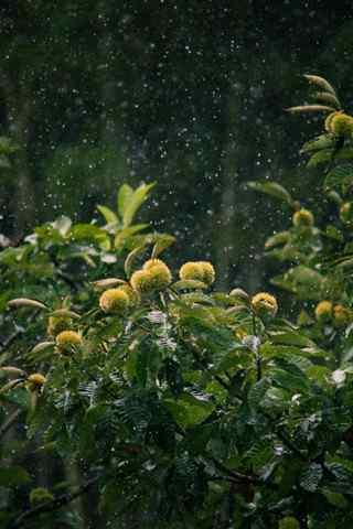 文艺美食之雨中的板栗手机壁纸