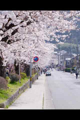 日本樱花树下的街道手机壁纸