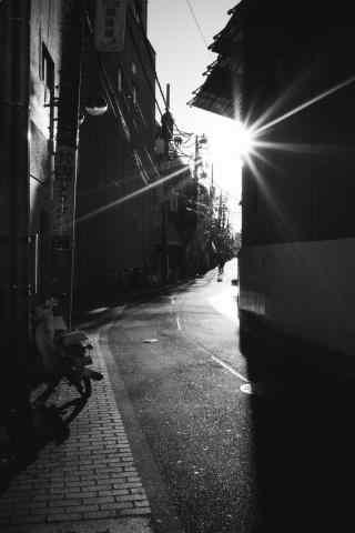 阳光照射在街道的转弯处手机壁纸