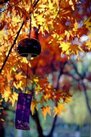 枫叶树下的日系小风铃手机壁纸