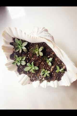 在贝壳上种植小草手机壁纸