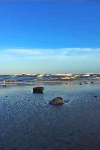 在沙滩上的小贝壳手机壁纸