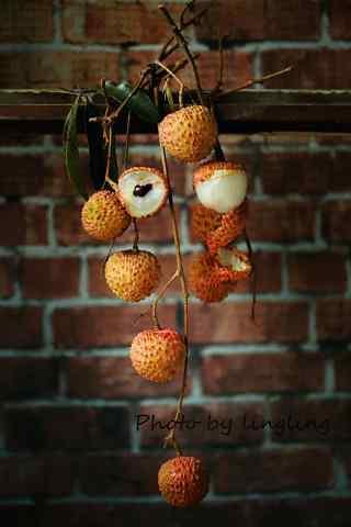 唯美树枝的垂挂的荔枝手机壁纸