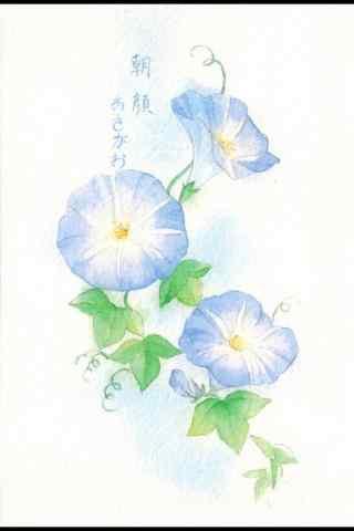 手繪素(su)雅好看的藍色牽牛花手機壁(bi)紙