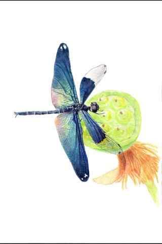手绘蜻蜓飞像莲蓬手机壁纸