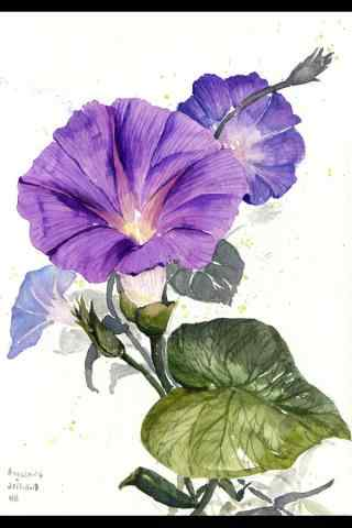 手(shou)繪(hui)好看的(de)紫色牽牛花手(shou)機壁紙