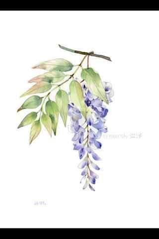 手繪簡(jian)約好看的紫藤(teng)蘿手機(ji)壁紙