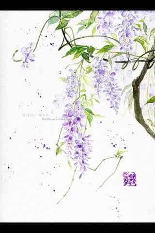 手繪好看的紫藤(teng)蘿手機(ji)壁紙