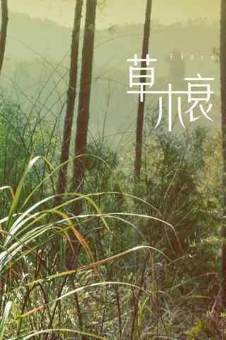 秦(qin)時麗人明(ming)月心(xin)草