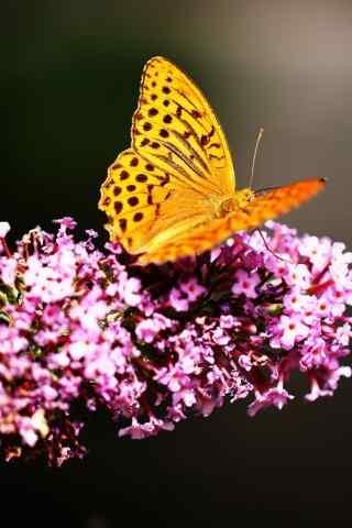 花朵上面的黄色蝴