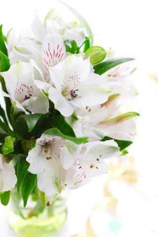 花团锦簇的百合花水培手机壁纸
