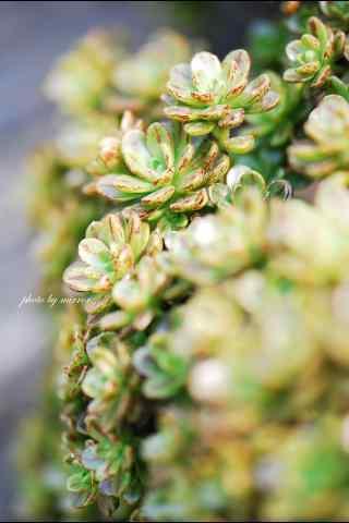 多肉植物唯美护眼绿色手机壁纸