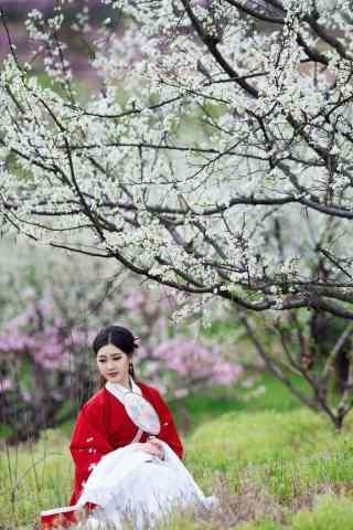梨花树下美女手机壁纸