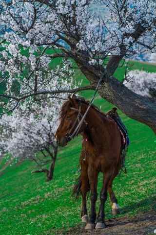 杏花与马风景手机壁纸