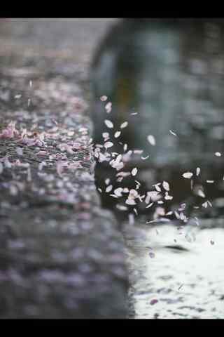 唯美的海棠花瓣手机壁纸(5张)