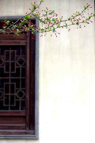 美丽的海棠花风景壁纸