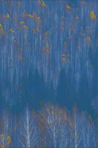 唯美创意的白桦林手机壁纸