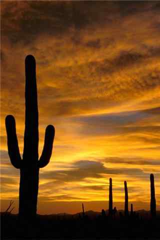 沙漠仙人掌手机壁纸