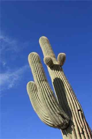 小清新沙漠仙人掌手机壁纸