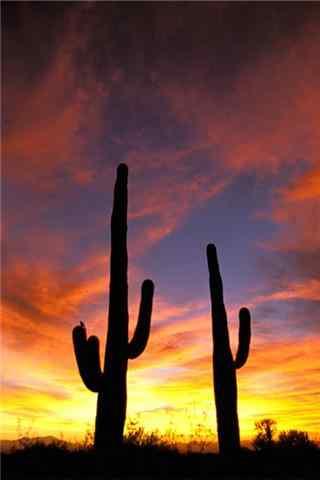 唯美的沙漠仙人掌手机壁纸
