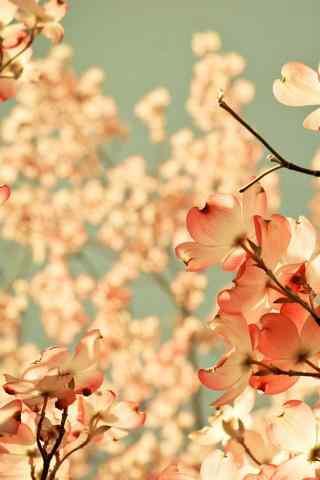 唯美花朵露水高清手机壁纸