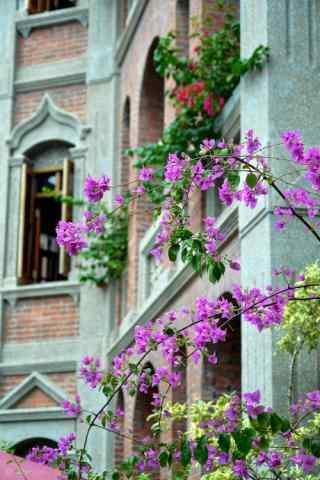 鼓浪屿特色花朵风景图片手机壁纸