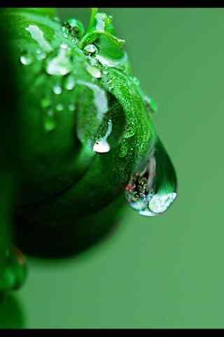 小清新绿色植物手