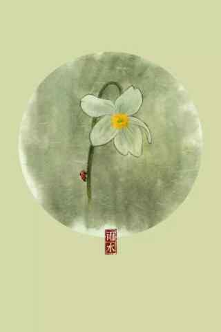 雨水节气-水仙花