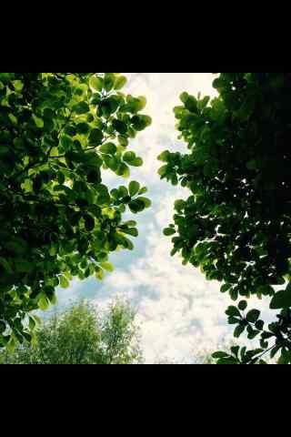 绿色护眼植物手机