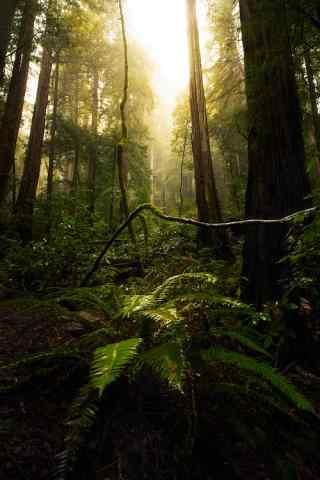 阳光穿透森林护眼桌面壁纸