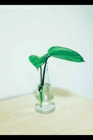 绿色护眼盆栽植物