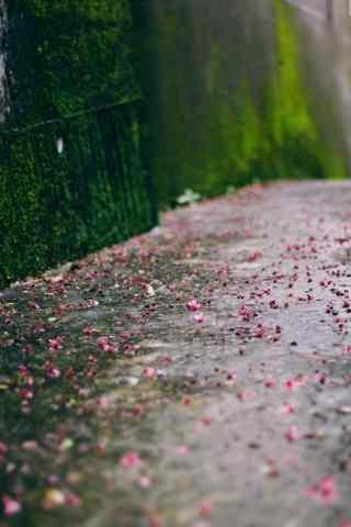 墙边青苔和散落的红花手机壁纸