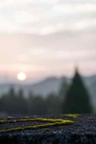 日出的阳光下的青苔桌面壁纸