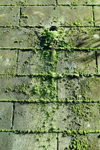 绿色青苔铺满整个石板手机壁纸