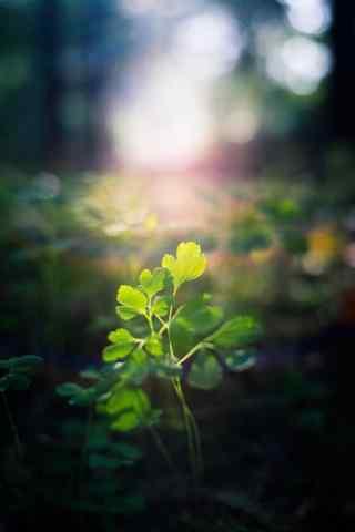 唯美小清新绿色小