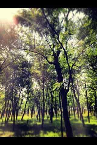 植树节—唯美小清