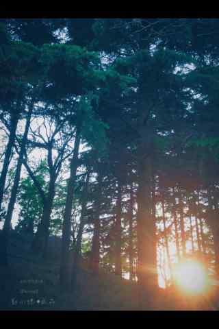 植树节—一余辉光
