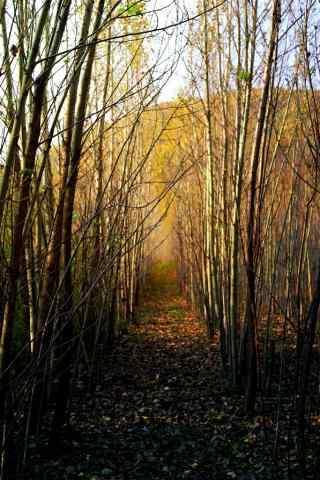 植树节—秋日里的