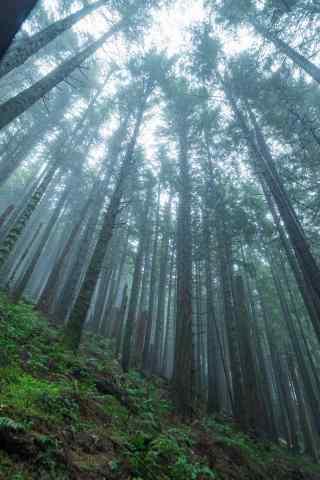 植树节—光影下的