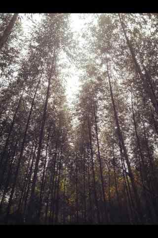 植树节—树林中透