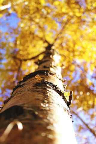 植树节—金黄色的