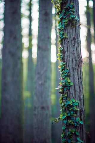植树节—树干上的