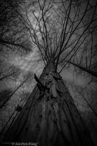 植树节—百年树干