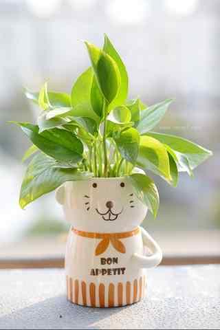 小熊盆栽绿萝植物手机壁纸