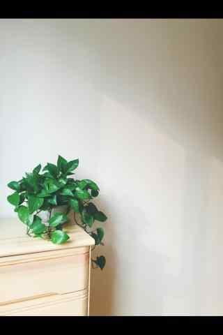 唯美小清新绿萝手机壁纸